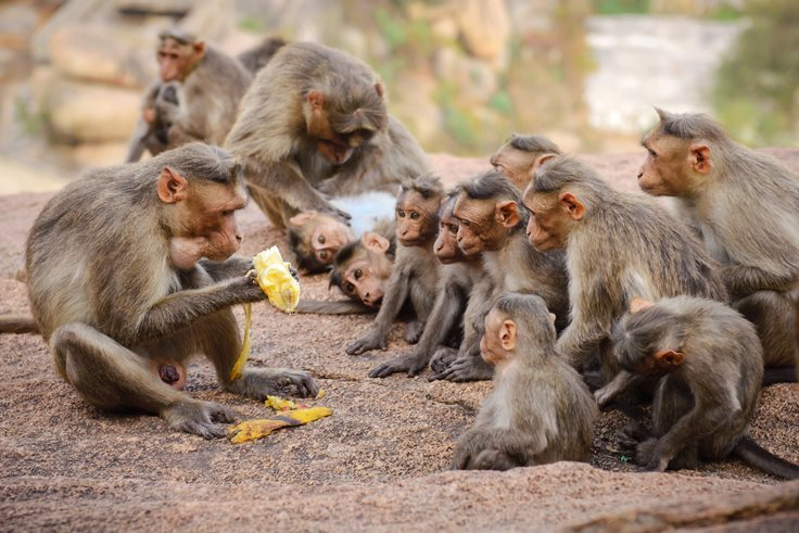 """THE PAINFUL TRUTH BEHIND """"THE MONKEY BUSINESS"""" STORY"""